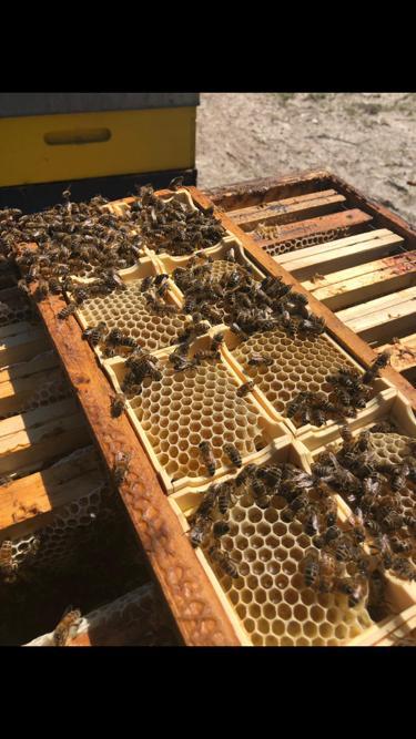 il miele in favo produzione