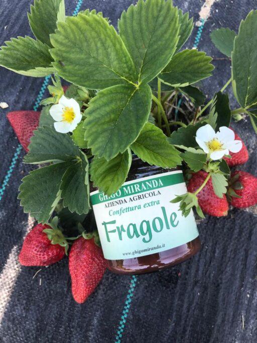 la confettura extra di fragole (2)