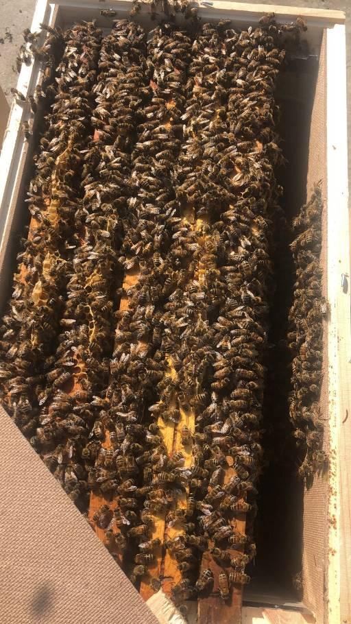 azienda agricola ghigo miranda sciami nuclei di api 11
