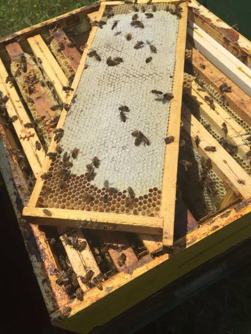 melario di miele in favo