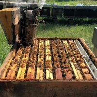 ghigo miranda una passione per le api